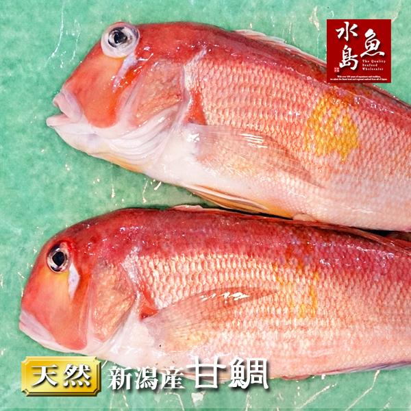 【送料無料】新潟産 天然 甘鯛 アマダイ(グジ)1,000~1,099g・2尾(生冷凍)