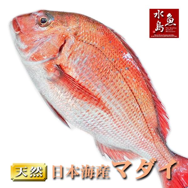 【送料無料】天然真鯛 マダイ 桜鯛 日本海産 3.5~3.9キロ物
