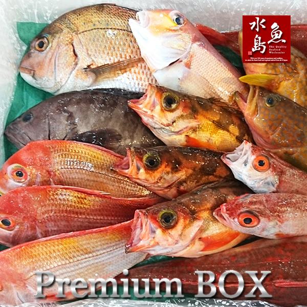 【送料無料】厳選 日本海の鮮魚セット「海におまかせ・大漁箱 プレミアムBOX」 大満足詰め合わせ