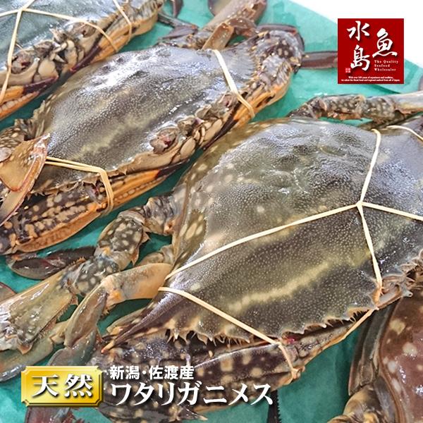 【送料無料】新潟・佐渡産 天然 ワタリガニ 渡り蟹 メス 大5杯
