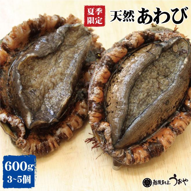 夏季限定【日本海産】天然あわび(600g)