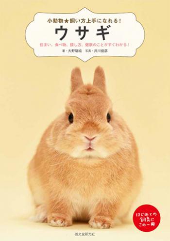 激安 豊富な品 激安特価 送料無料 ウサギ