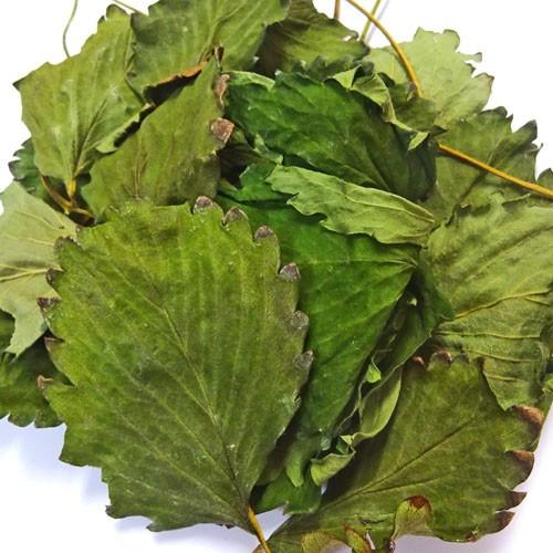 国産 無農薬 いちごの葉っぱ ラッピング無料 実物 まるごと