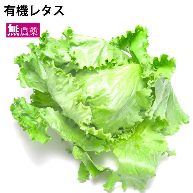 国産 野菜 ついに入荷 無農薬 サラダ野菜 有機レタス 大幅値下げランキング 1玉 無農薬栽培