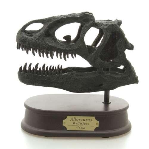 頭骨フィギュア アロサウルス スカル&ジョーズモデル 恐竜グッズ 通販【取寄品】【プレゼント】【バースデー 誕生日ギフト】【入園祝い 入学祝い】ベルコモン 【のし利用可】