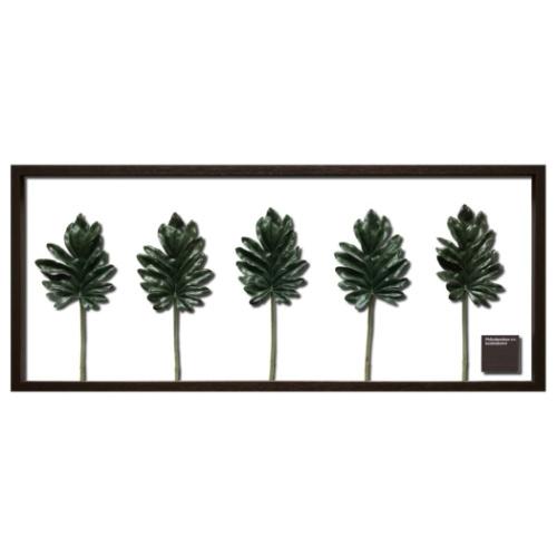 送料無料 Kookaburra リーフアートフレーム F-style Frame クッカバラ 完売 美工社 取寄品 101.5×42.5×3cm 101.5×42. 毎日がバーゲンセール 101.5x42.5x3cm 造花 額付きインテリア