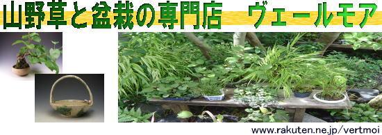山野草と盆栽の専門店ヴェールモア:山野草、盆栽のオーソリティー