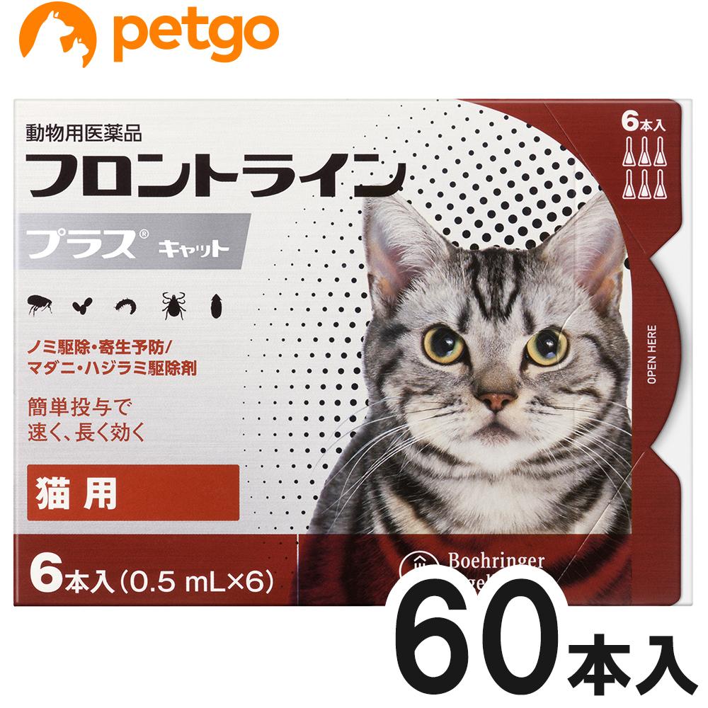 【10箱セット】猫用フロントラインプラスキャット 6本(6ピペット)(動物用医薬品)