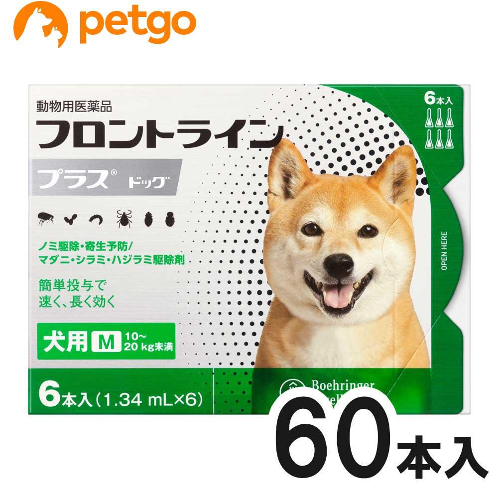 【10箱セット】犬用フロントラインプラスドッグM 10kg~20kg 6本(6ピペット)(動物用医薬品)【使用期限:2022年1月】【あす楽】
