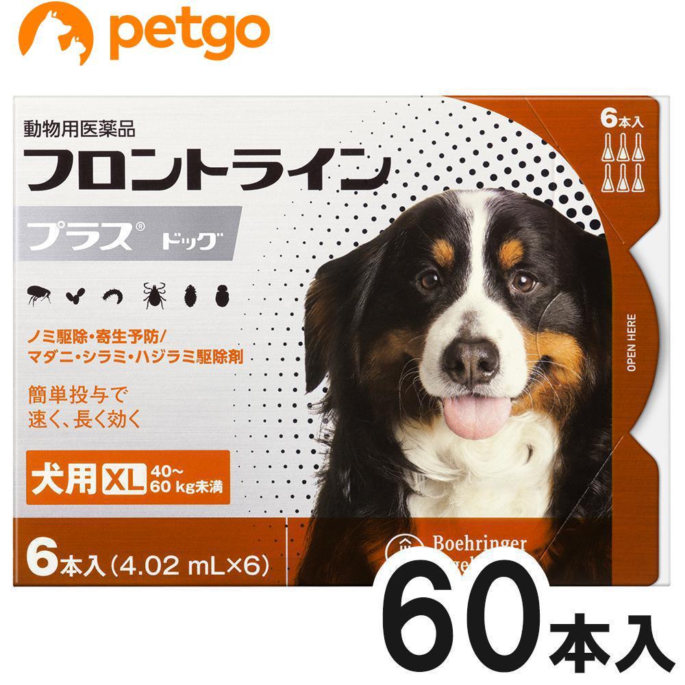 【10箱セット】犬用フロントラインプラスドッグXL 40kg~60kg 6本(6ピペット)(動物用医薬品)【使用期限:2021年10月】【あす楽】