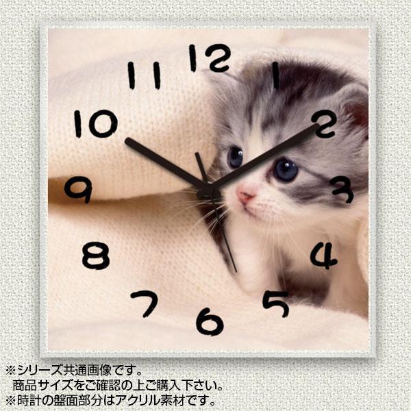 MYCLO(マイクロ) 壁掛け時計 アクリル素材(クリア) 四角 23cm 猫(ネコ) com204