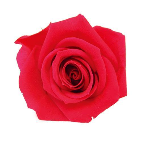 【2018最新作】 verdissimo ヴェルディッシモ バルク ミニローズ シャイニーレッド 58937:生活雑貨のお店!Vie-UP-花・観葉植物