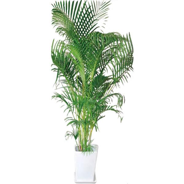 観葉植物 アレカヤシ 10号 170cm ギフト 開店 新築 引っ越し 祝い インテリア グリーン 春 新生活