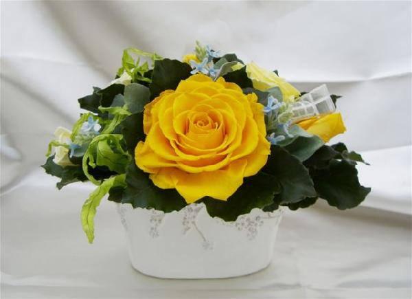 天然誕生石アクセサリー付 新シリーズ!11月のバースデーフラワーアレンジ 黄色のバラのプリザーブドフラワー[PW]
