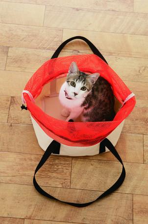 バック ペット 猫用品 犬用品 ペットグッズ トート トートキャリー キャリー トートバッグ 病院 便利物 帆布 安定 洗濯可能 お気に入り 10点