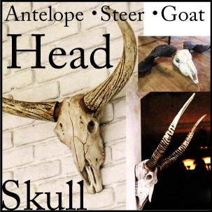 5%割引ラクーポンが使える/ディスプレー/店舗什器/割引/送料無料/スカル/S355-72/Goat head /ゴートヘッド/S355-71/Steer head/スティアヘッド/ S355-70/Antelope head/アンテロープヘッド/壁掛け/頭蓋骨/DULTON/ダルトン/父の日
