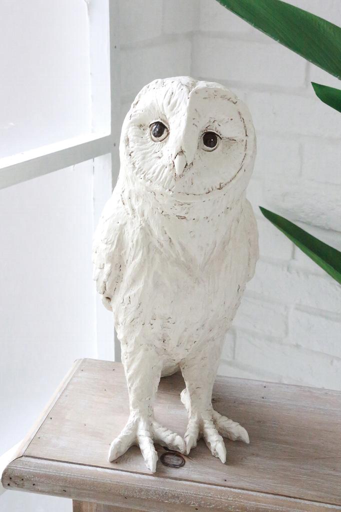 白い フクロウ