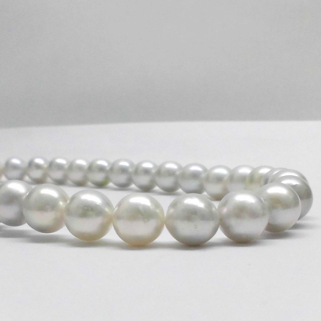 (529)パール真珠アコヤ真珠ネックレス9mm-9.5mm あこや真珠薄いグレー(ナチュラル)チョーカー本真珠38cm39cm40cm41cmシルバー9ミリ-9.5ミリ38センチ39センチ40センチ41センチ