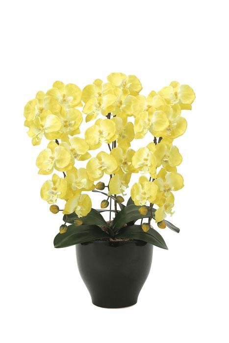 光の楽園 胡蝶蘭セリースY 917A100 2020年版 アートフラワー 造花 光触媒