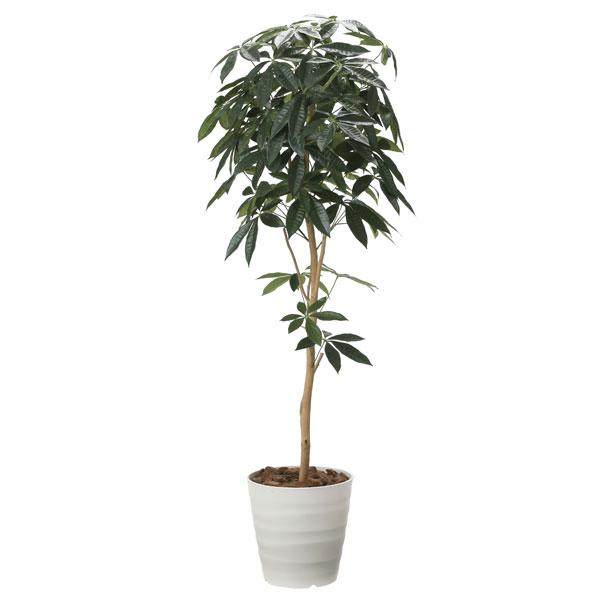 光の楽園 デザインパキラ1.6 2008A260 アートグリーン フェイクグリーン 人工観葉植物 光触媒 2020年版