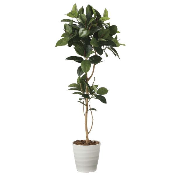 光の楽園 ゴムの木1.8 2024A350 アートグリーン フェイクグリーン 人工観葉植物 光触媒 2020年版
