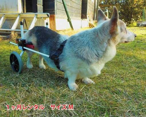 40000台以上の実績のある犬の車椅子 老犬のリハビリや足腰の弱った犬にぴったりの犬用車椅子 事前に試乗車の貸出も可能です 1カ月レンタル延長 犬の車椅子 K9カートスタンダード後脚サポート M 定番の人気シリーズPOINT(ポイント)入荷 11.1~18kg 用 介護用品 老犬 高齢犬 わんケア コーギー 犬用 カート 車いす 後足 後肢 歩行器 車椅子 予約販売品 中型犬 バギー ビーグル