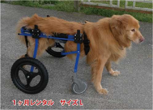この商品はすでにレンタルをされている方のみ注文可能です 1カ月レンタル延長 4輪の犬の車椅子 K9カートスタンダード L 18~30kg 用 新着セール 訳あり品送料無料 ラブラドール シェパード バーニーズ 介護用品 わんケア 犬用 犬 バギー カート 歩行 ペット 後足 後肢 歩行器 車椅子 レンタル 補助 車いす 大型犬用車椅子
