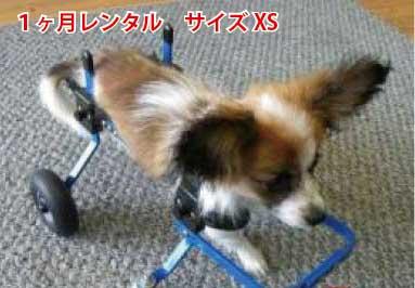 40000台以上の実績のある犬の車椅子 老犬のリハビリや足腰の弱った犬にぴったりの犬用車椅子 試乗車の貸出は問い合わせを 1カ月レンタル延長 4輪の犬の車椅子 K9カート 格安店 スタンダード XS 猫 5kg未満 用 犬の車椅子 ミニチュア ダックス トイプードル 介護用品 割引 車いす 補助 車椅子 バギー 歩行器 カート 高齢犬 小型犬 老犬 後肢 犬 後足 歩行 レンタル わんケア 犬用