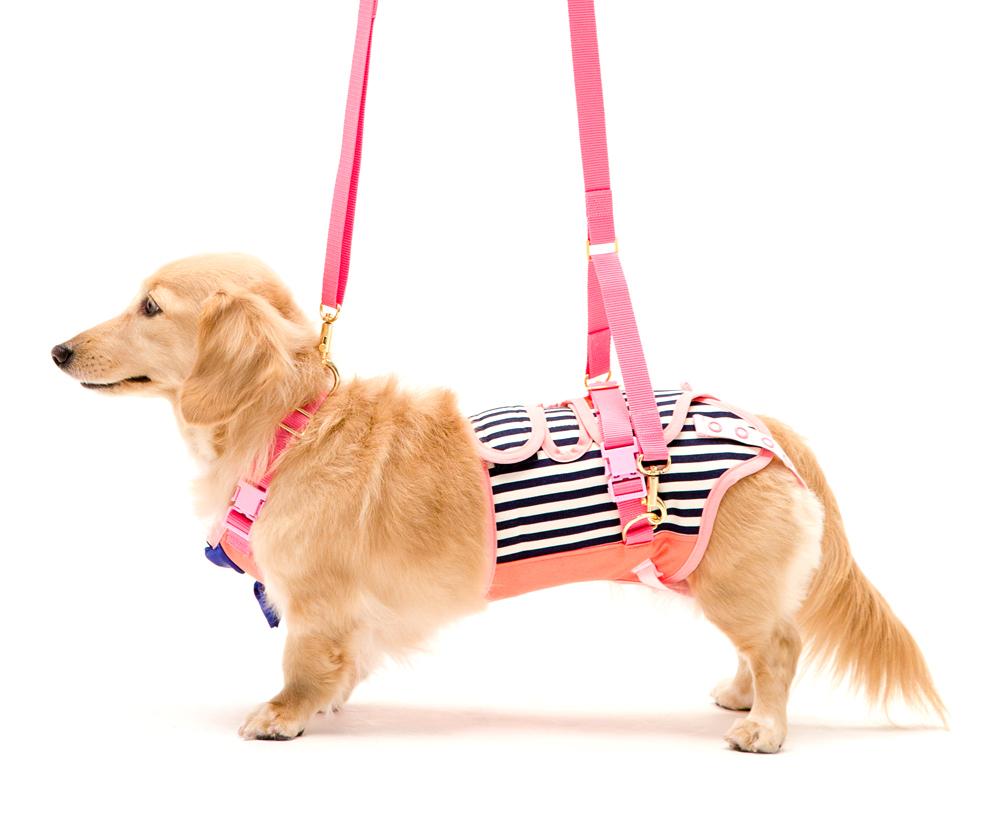 サポーターパッド付だから腰を安定させるんです。ヘルニアのワンちゃんに最適 歩行補助ハーネス 小型犬・ダックス用サポーターパッド付き   チェリーマリン 介助ハーネス 犬ヘルニア補助