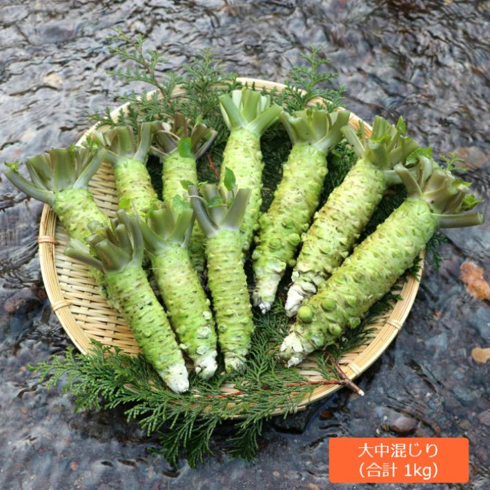 生わさび 1kg(大中サイズ混じり) 伊豆産 わさびのマルキチ わさび 本わさび 山葵 ワサビ 薬味
