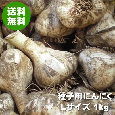 にんにく種子専用圃場で栽培した青森県産種子用にんにく 卸直営 消毒は施しておりませんので食べることもできます 青森にんにく 種子用 Lサイズ 1kg 送料無料 全店販売中 たね 種球 福地ホワイト六片 令和3年