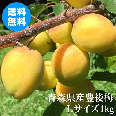 青森県産ほぼ完熟豊後梅 Lサイズ 1kg【クール冷蔵便送料無料】