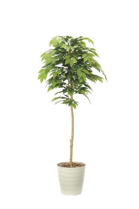 アートグリーン 人工観葉植物 光触媒 光の楽園 ケヤキ1.6 904A330 2020年版