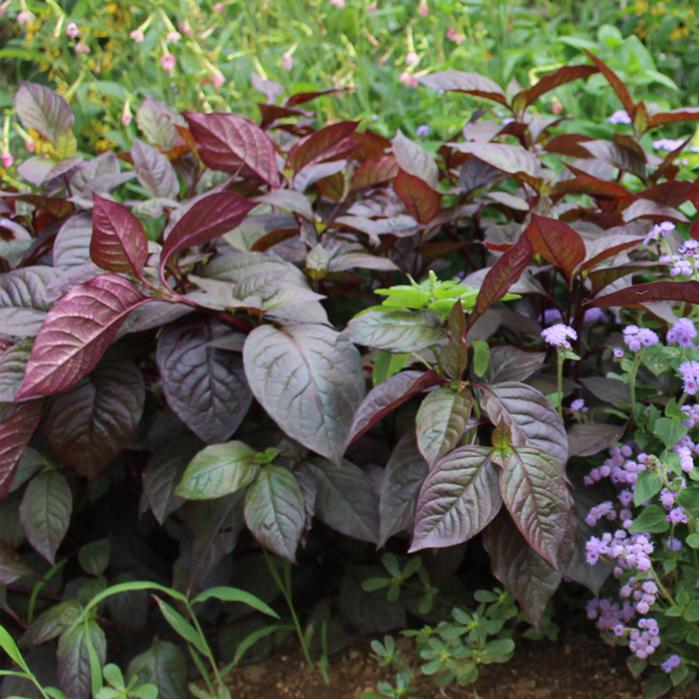 Wfgarden Plant A Flower Seedling Flower Garden Of The Pot
