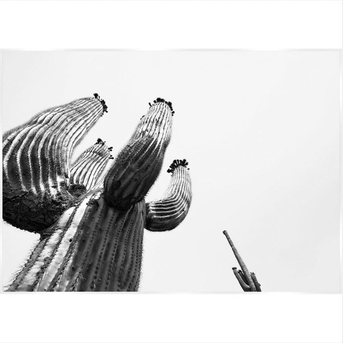 [スパイス/SPICE]モノクローム アンドレアサボテン 絵画 Monochrome Andrea Saboten HPDN1100
