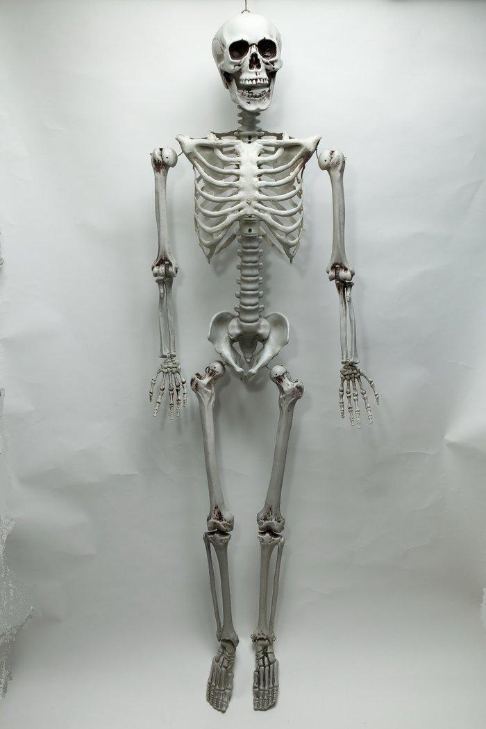 送料無料 等身大骸骨 ハロウィン 飾り