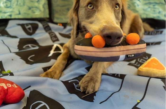 POLER(ポーラー)DogChewSTEAMEDHAMSペットグッズ犬ドッグおもちゃ