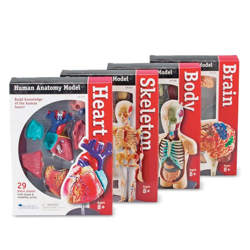 【人体模型】解剖学モデルバンドルセット  3年生以上