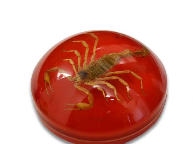"""全四色""""Scorpion Shift Knob/sukopionshifutonobu""""(復古零件10鍵變換手變換哈雷斬波器)"""