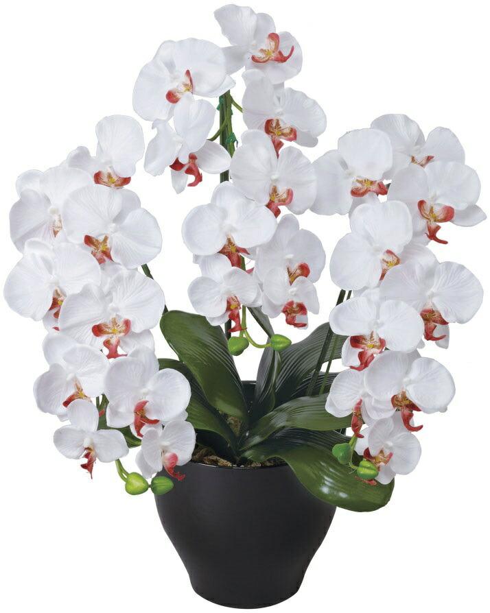 胡蝶蘭 せリース W 光触媒 消臭 造花 お祝い 人気 出展 開院 お祝い花 WAB