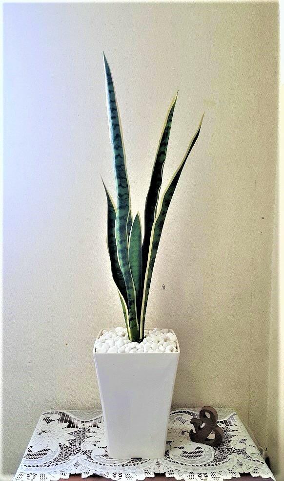 授与 評判 人工観葉植物サンスベリア1m触媒加工品送料無料フェイクグリーンインテリアグリーン