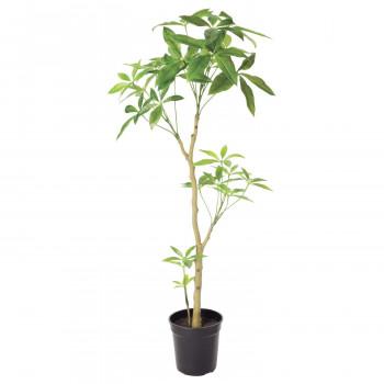 観葉物 パキラ グリーン 1本セット P4699 アレンジメント