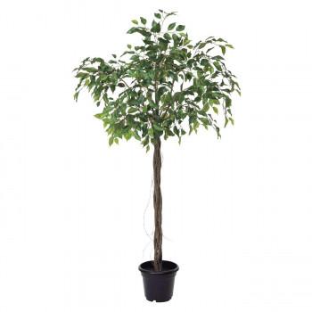 観葉物 ファイカスツリー グリーン 1本セット P4791 アレンジメント