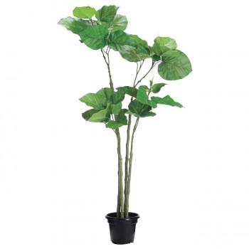 観葉物 ウンベラータ グリーン 1本セット P4588 アレンジメント