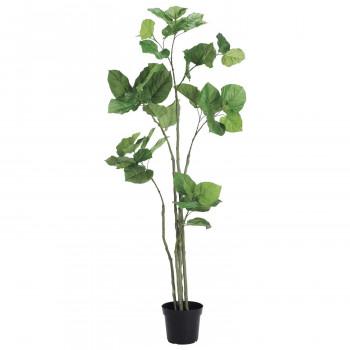 観葉物 ウンベラータ グリーン 1本セット P4589 アレンジメント