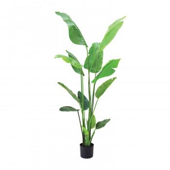 観葉物 トラベラーズパームポット グリーン 1本セット T0256 アレンジメント