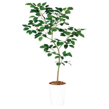 東北花材 TOKA 人工樹木 ベンガルボダイジュ FST 99114
