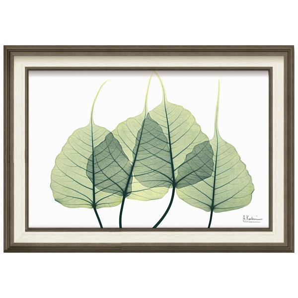 ユーパワー X RAY キャンバスアート Mサイズ 「リーフ3」 XR-12009インテリア 飾り 自然