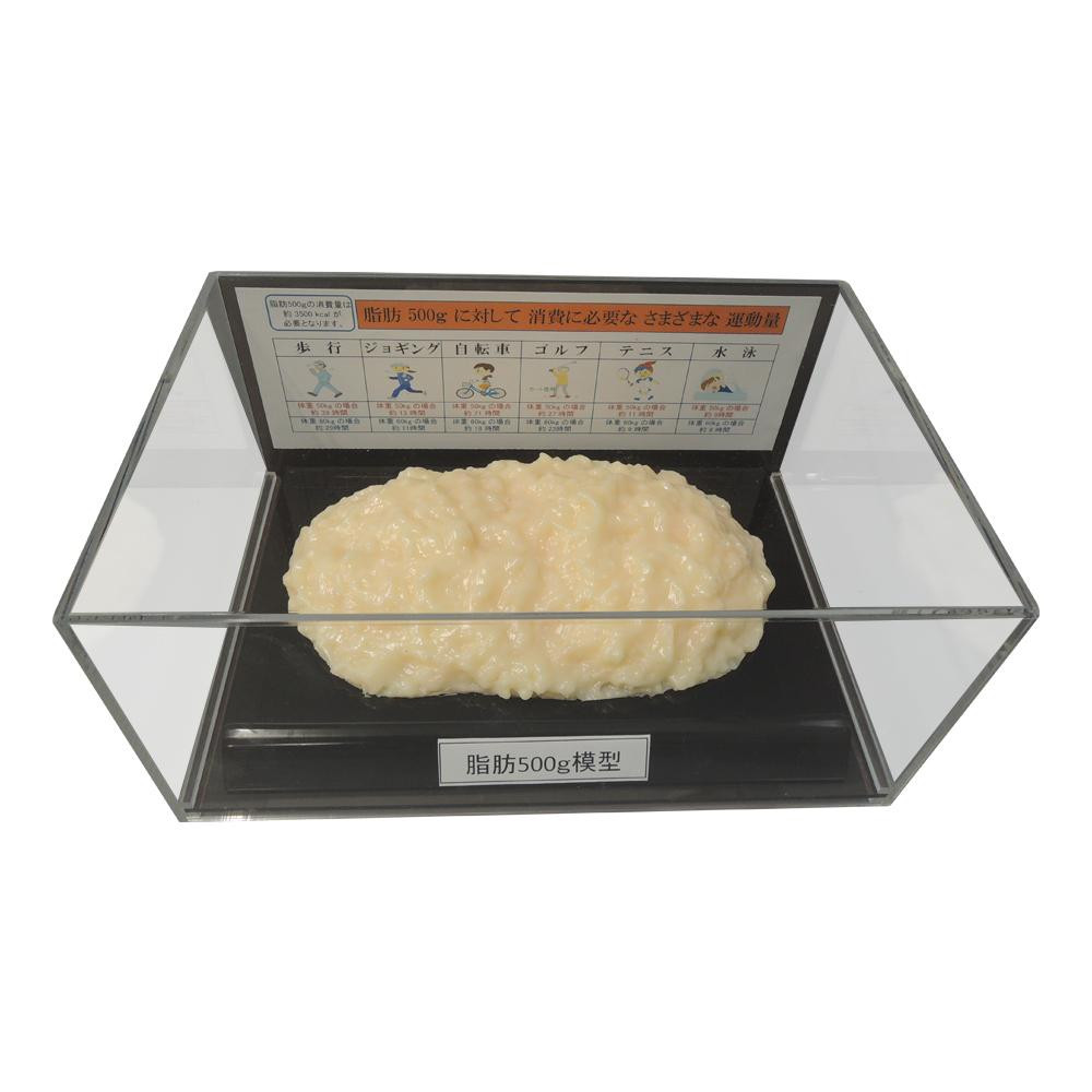 脂肪模型フィギュアケース入 500g IP-977
