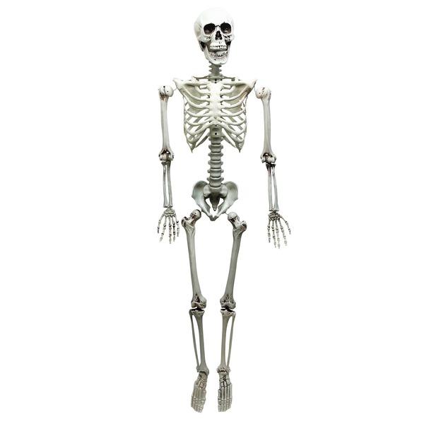 【送料無料】コスプレ衣装/パーティーグッズ 【等身大骸骨】 仮装 イベントグッズ 舞台小物【代引不可】
